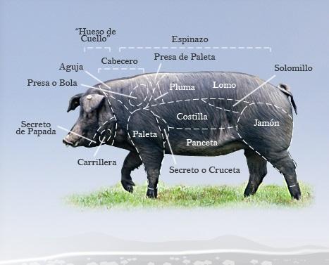 despiece de cerdo ibérico de bellota