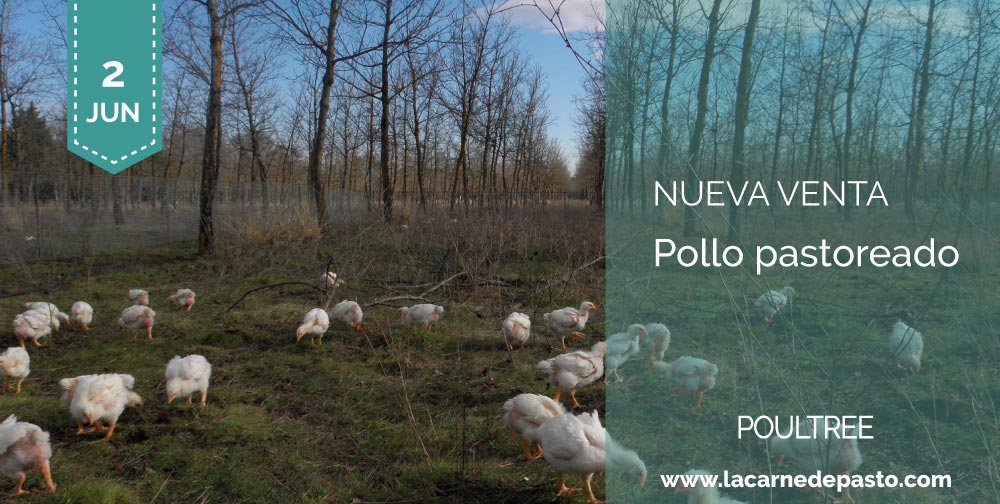 pollo pastoreado de poultree