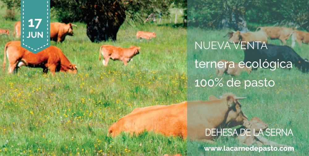 ternera ecológica 100% de pasto