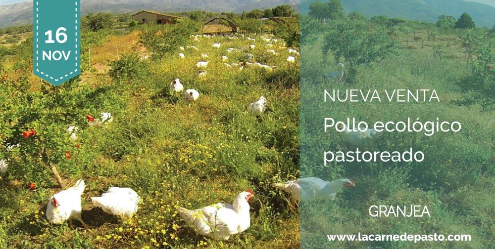 pollo ecológico pastoreado
